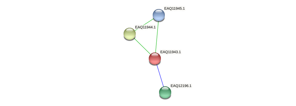 RB2654_07671 protein (Maritimibacter alkaliphilus) - STRING interaction network