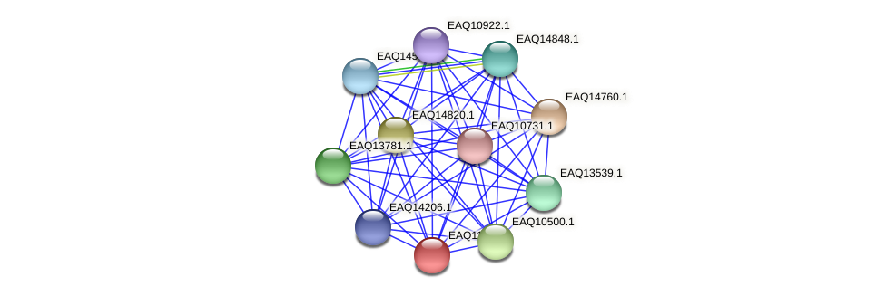RB2654_07691 protein (Maritimibacter alkaliphilus) - STRING interaction network