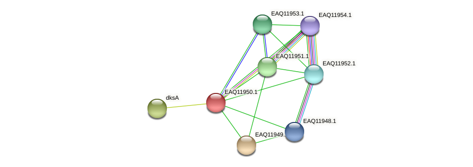 RB2654_07706 protein (Maritimibacter alkaliphilus) - STRING interaction network