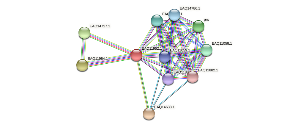RB2654_07716 protein (Maritimibacter alkaliphilus) - STRING interaction network