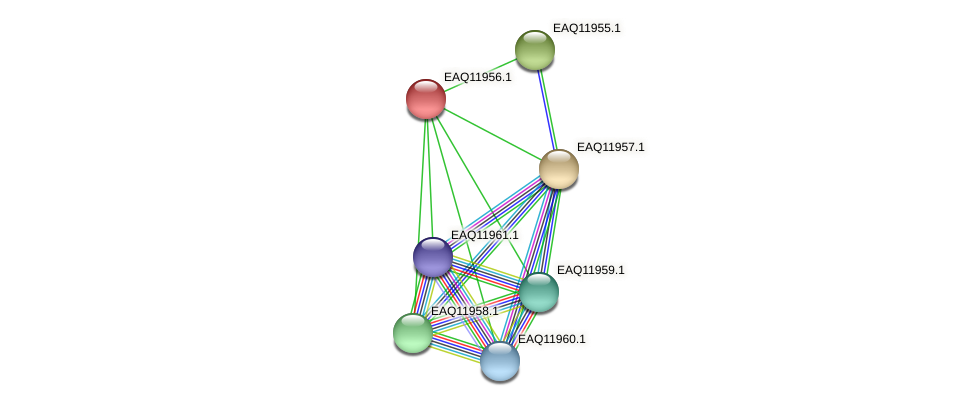 RB2654_07736 protein (Maritimibacter alkaliphilus) - STRING interaction network