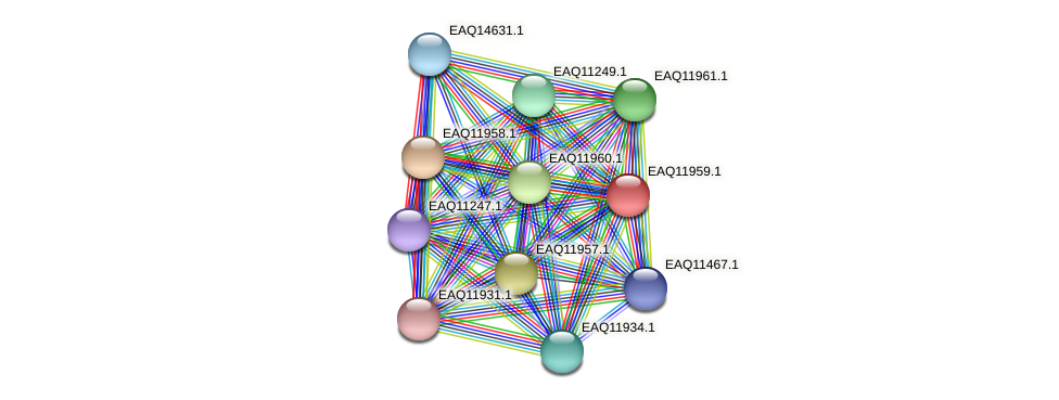 RB2654_07751 protein (Maritimibacter alkaliphilus) - STRING interaction network
