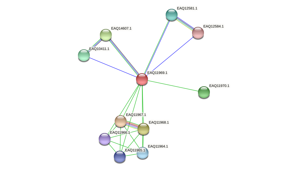 RB2654_07801 protein (Maritimibacter alkaliphilus) - STRING interaction network