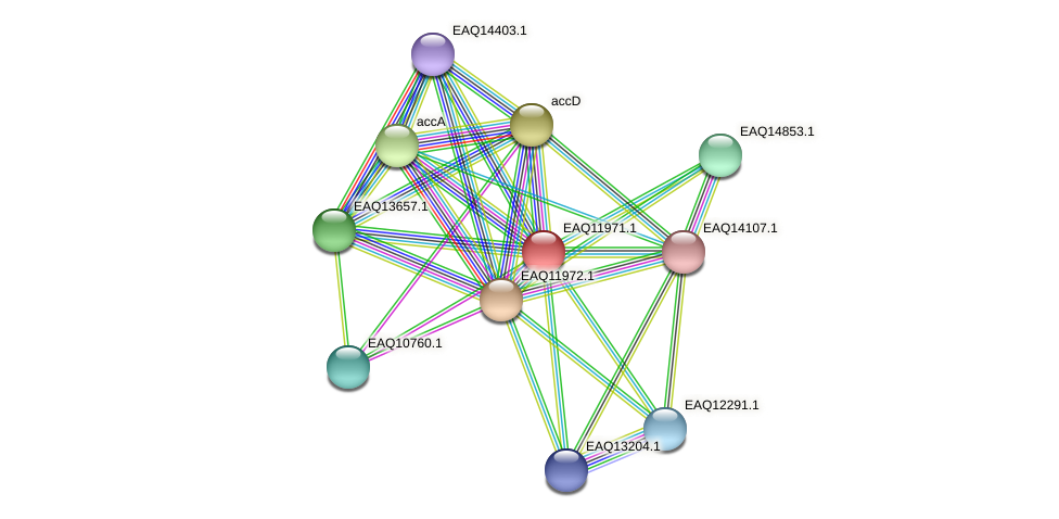 RB2654_07811 protein (Maritimibacter alkaliphilus) - STRING interaction network