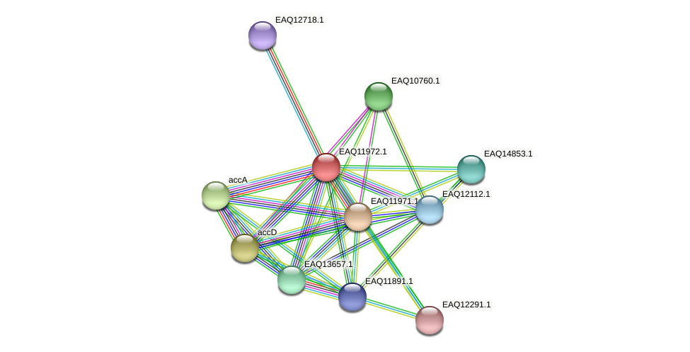 RB2654_07816 protein (Maritimibacter alkaliphilus) - STRING interaction network