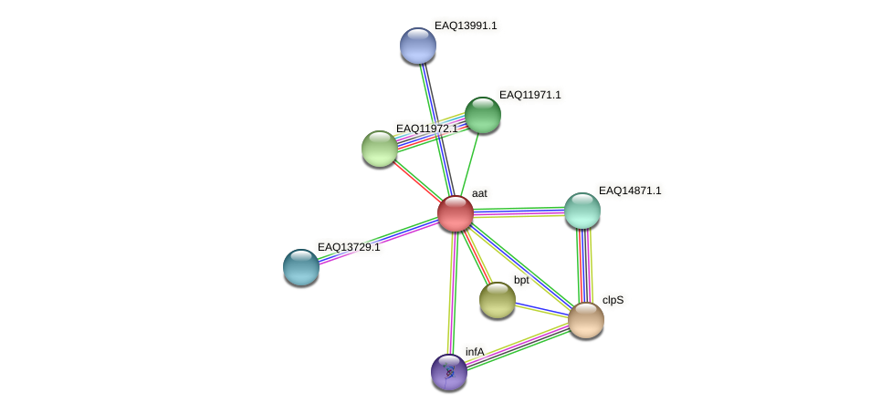 aat protein (Maritimibacter alkaliphilus) - STRING interaction network