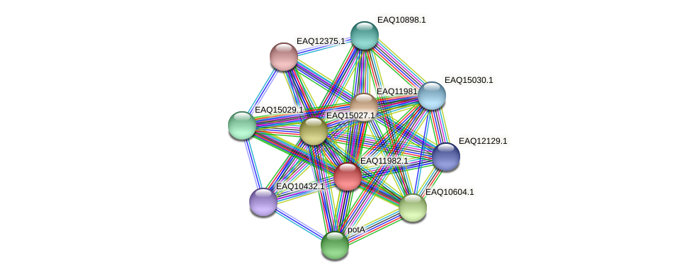 RB2654_07866 protein (Maritimibacter alkaliphilus) - STRING interaction network