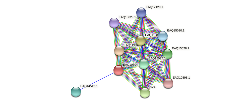 RB2654_07875 protein (Maritimibacter alkaliphilus) - STRING interaction network