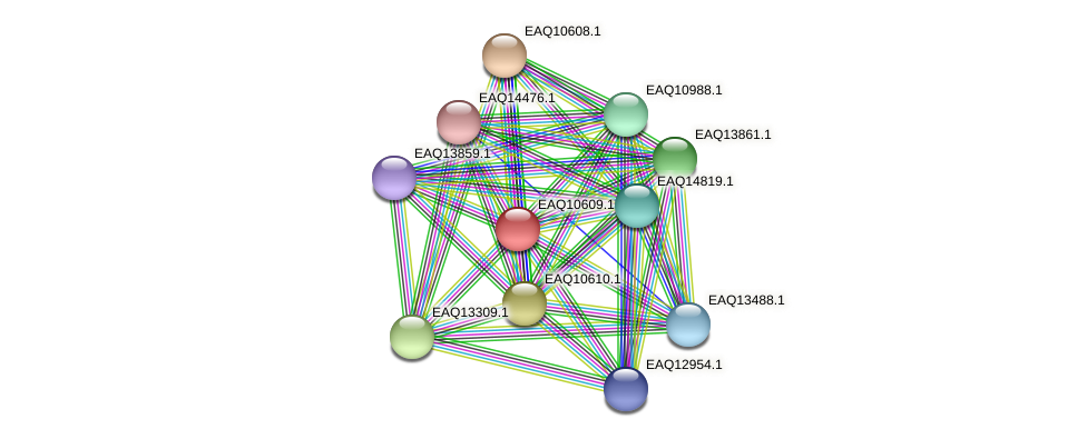 RB2654_07900 protein (Maritimibacter alkaliphilus) - STRING interaction network