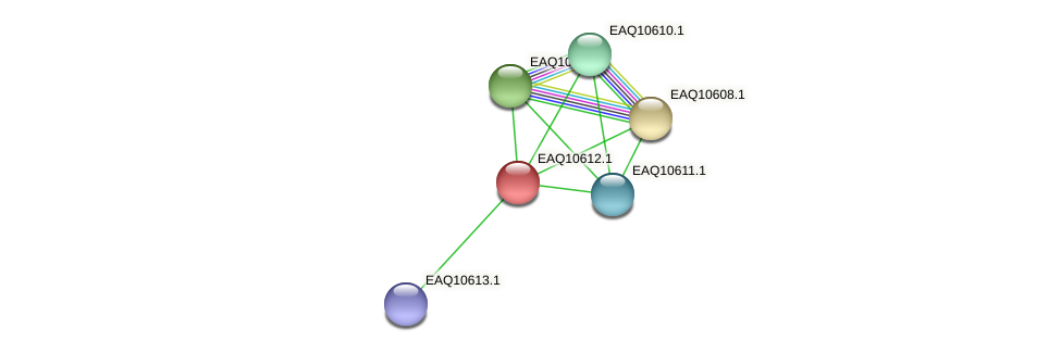 RB2654_07915 protein (Maritimibacter alkaliphilus) - STRING interaction network