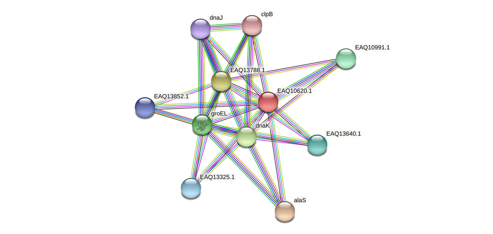 RB2654_07955 protein (Maritimibacter alkaliphilus) - STRING interaction network