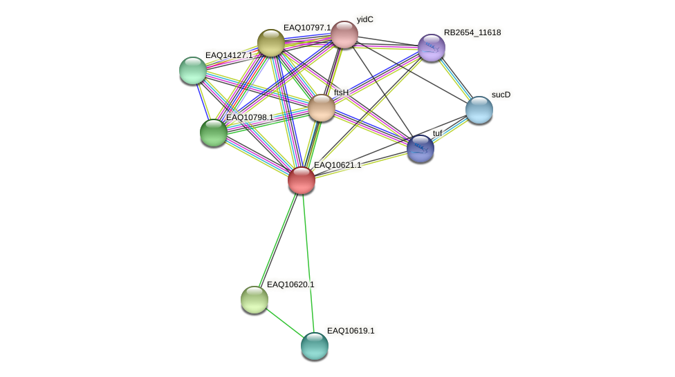 RB2654_07960 protein (Maritimibacter alkaliphilus) - STRING interaction network