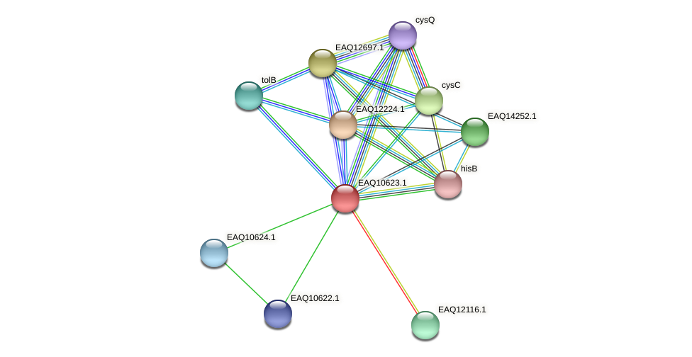 RB2654_07970 protein (Maritimibacter alkaliphilus) - STRING interaction network