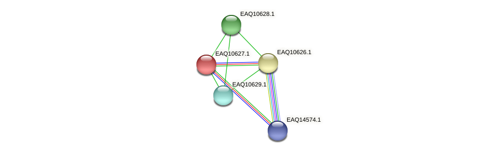 RB2654_07990 protein (Maritimibacter alkaliphilus) - STRING interaction network