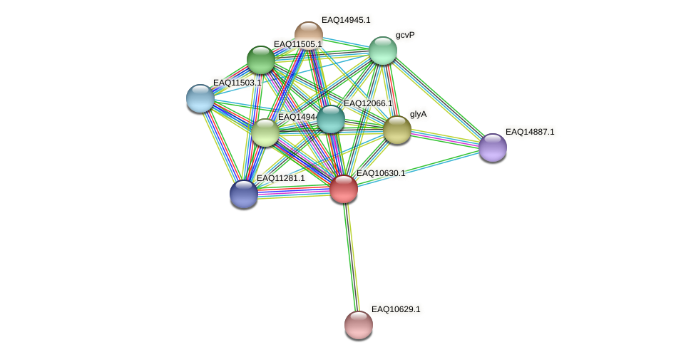 RB2654_08005 protein (Maritimibacter alkaliphilus) - STRING interaction network