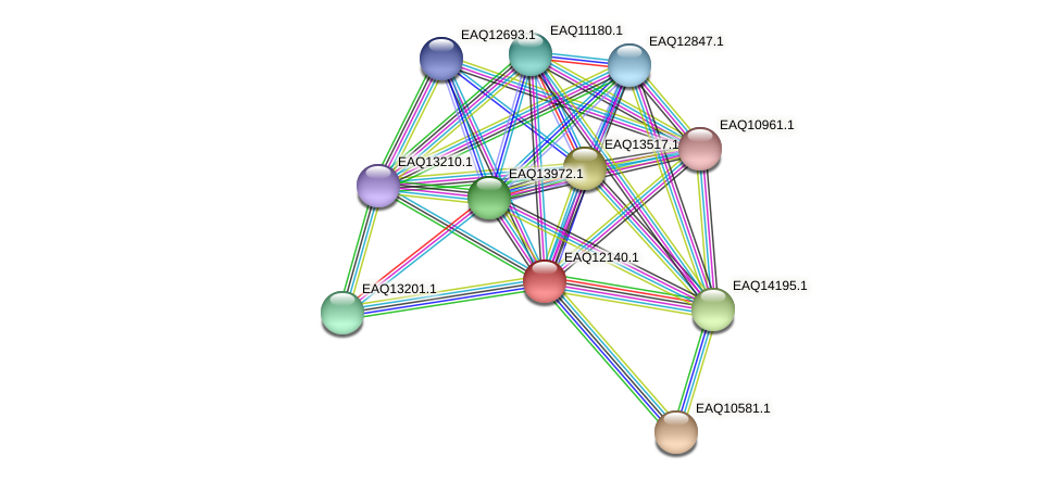 RB2654_08042 protein (Maritimibacter alkaliphilus) - STRING interaction network