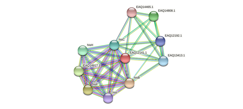 RB2654_08047 protein (Maritimibacter alkaliphilus) - STRING interaction network