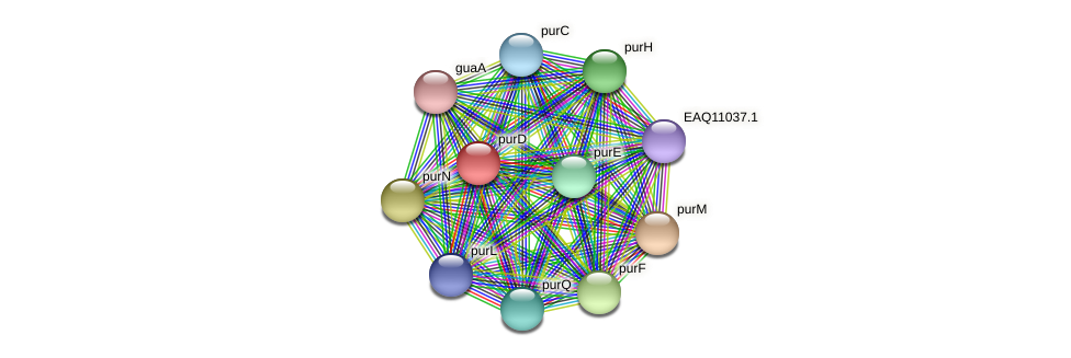 purD protein (Maritimibacter alkaliphilus) - STRING interaction network