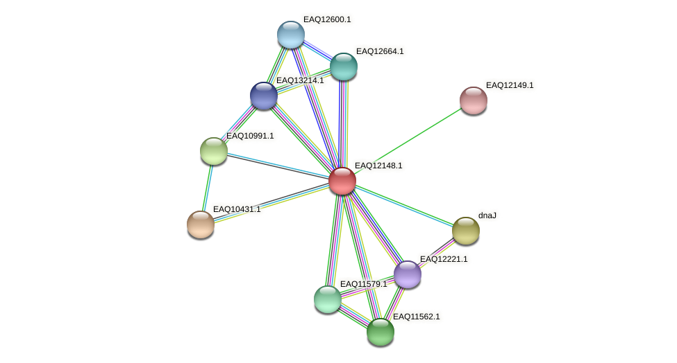 RB2654_08082 protein (Maritimibacter alkaliphilus) - STRING interaction network