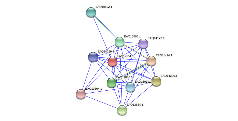 RB2654_08097 protein (Maritimibacter alkaliphilus) - STRING interaction network