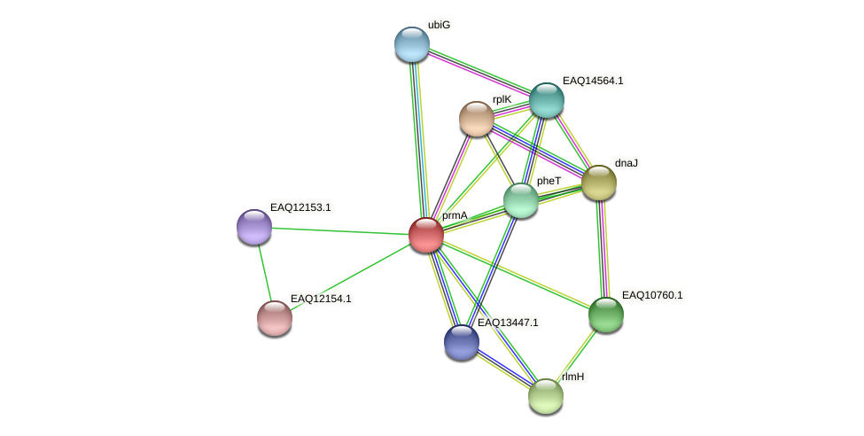 prmA protein (Maritimibacter alkaliphilus) - STRING interaction network