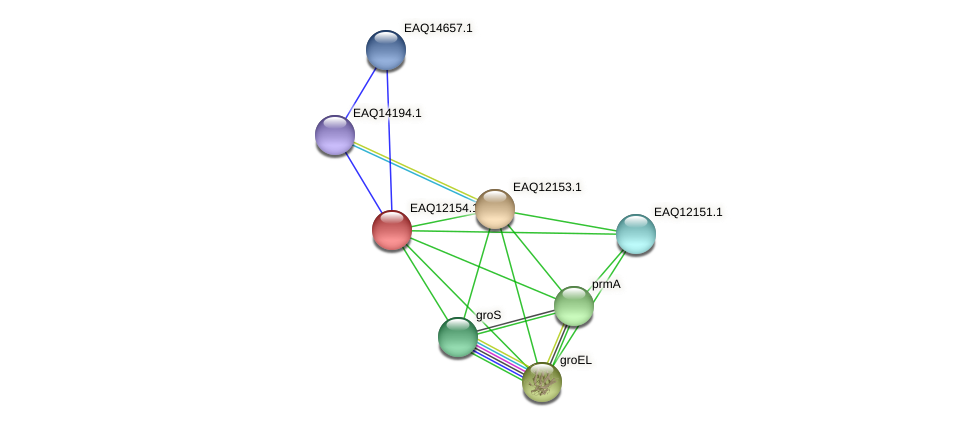 RB2654_08112 protein (Maritimibacter alkaliphilus) - STRING interaction network