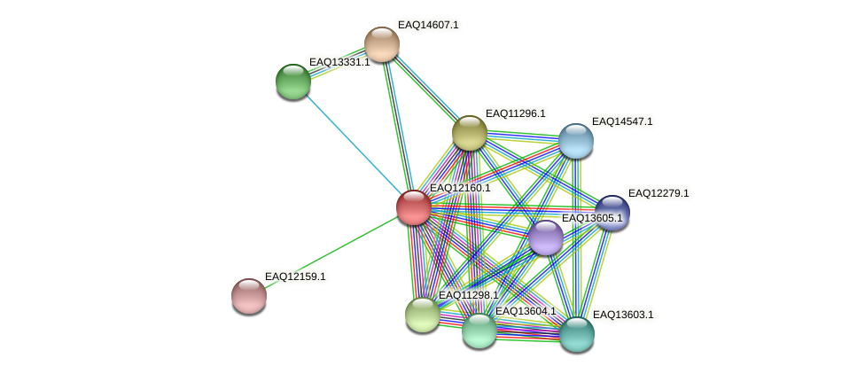 RB2654_08142 protein (Maritimibacter alkaliphilus) - STRING interaction network