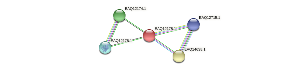 RB2654_08217 protein (Maritimibacter alkaliphilus) - STRING interaction network