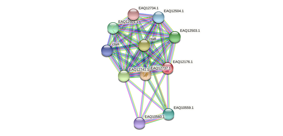 RB2654_08222 protein (Maritimibacter alkaliphilus) - STRING interaction network
