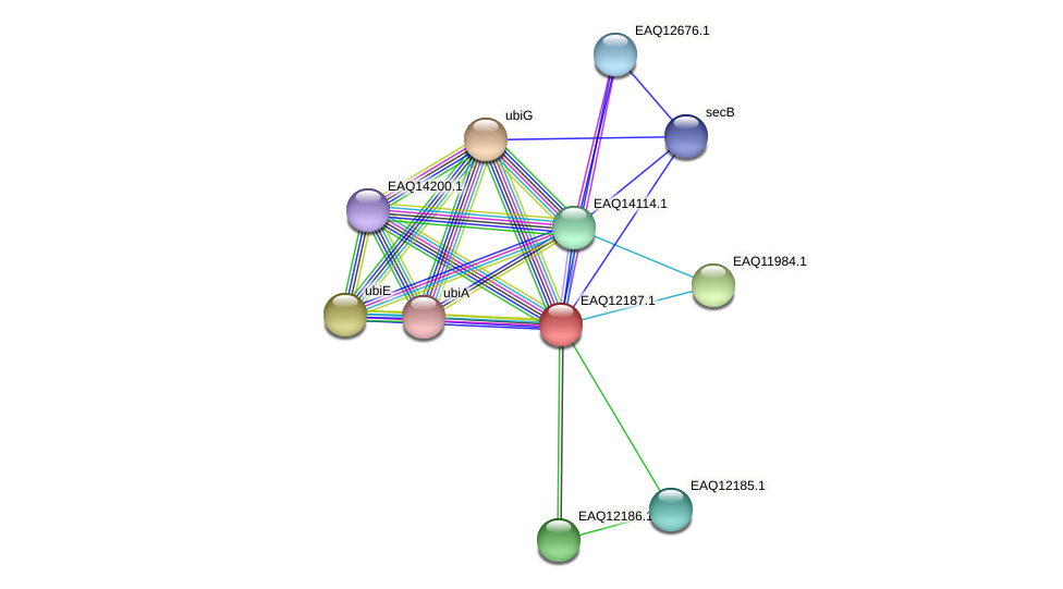 RB2654_08277 protein (Maritimibacter alkaliphilus) - STRING interaction network