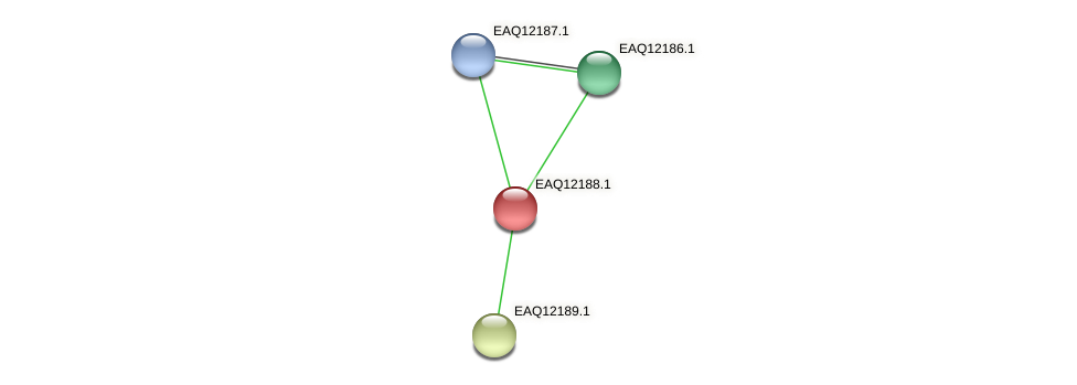 RB2654_08282 protein (Maritimibacter alkaliphilus) - STRING interaction network