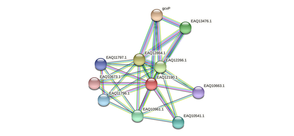 RB2654_08292 protein (Maritimibacter alkaliphilus) - STRING interaction network
