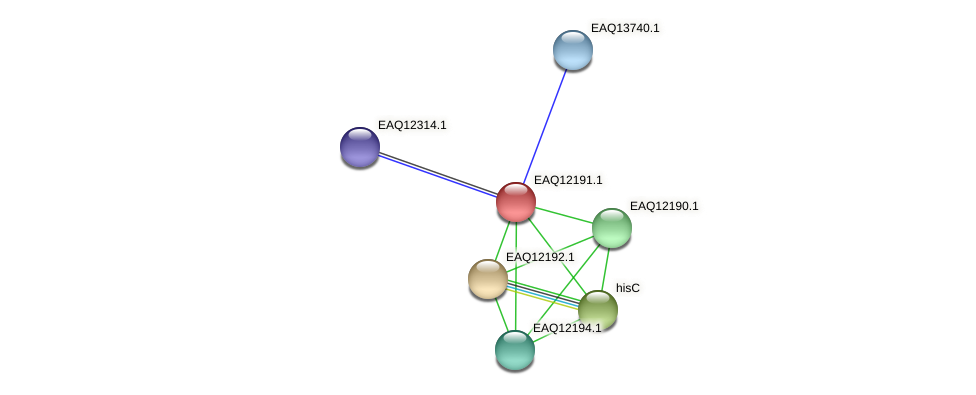 RB2654_08297 protein (Maritimibacter alkaliphilus) - STRING interaction network