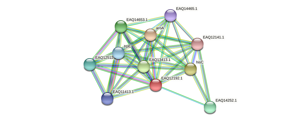 RB2654_08302 protein (Maritimibacter alkaliphilus) - STRING interaction network