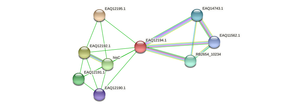 RB2654_08312 protein (Maritimibacter alkaliphilus) - STRING interaction network