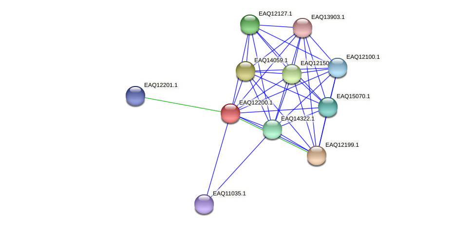 RB2654_08342 protein (Maritimibacter alkaliphilus) - STRING interaction network