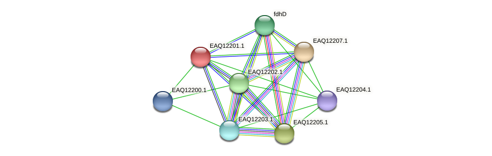 RB2654_08347 protein (Maritimibacter alkaliphilus) - STRING interaction network