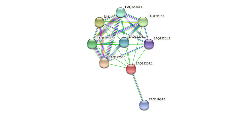 RB2654_08362 protein (Maritimibacter alkaliphilus) - STRING interaction network