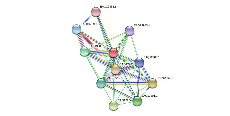 RB2654_08372 protein (Maritimibacter alkaliphilus) - STRING interaction network