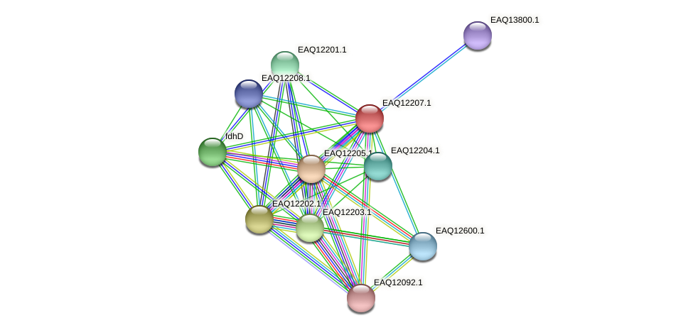 RB2654_08377 protein (Maritimibacter alkaliphilus) - STRING interaction network