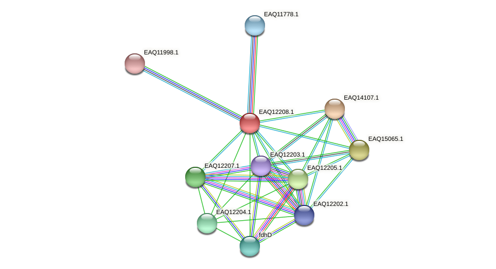 RB2654_08382 protein (Maritimibacter alkaliphilus) - STRING interaction network