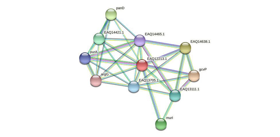RB2654_08407 protein (Maritimibacter alkaliphilus) - STRING interaction network