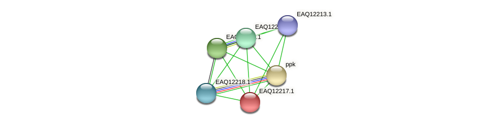 RB2654_08427 protein (Maritimibacter alkaliphilus) - STRING interaction network