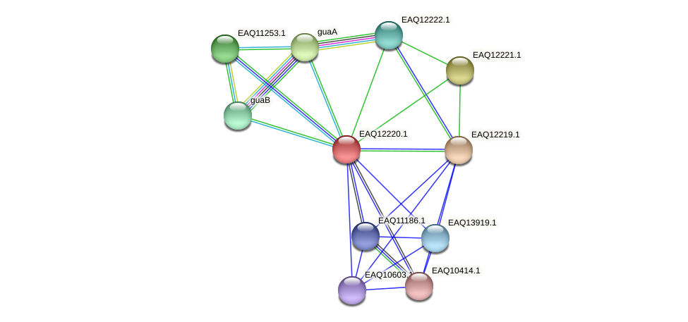 RB2654_08442 protein (Maritimibacter alkaliphilus) - STRING interaction network