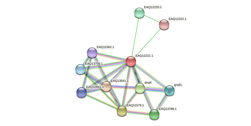 RB2654_08447 protein (Maritimibacter alkaliphilus) - STRING interaction network