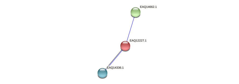 RB2654_08477 protein (Maritimibacter alkaliphilus) - STRING interaction network