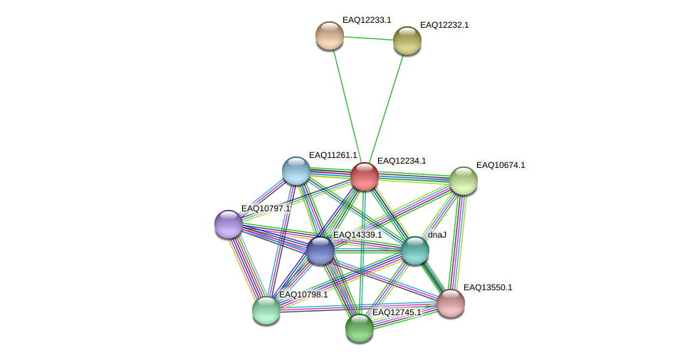 RB2654_08512 protein (Maritimibacter alkaliphilus) - STRING interaction network
