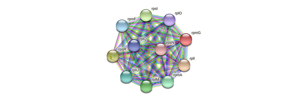 rpmG protein (Maritimibacter alkaliphilus) - STRING interaction network
