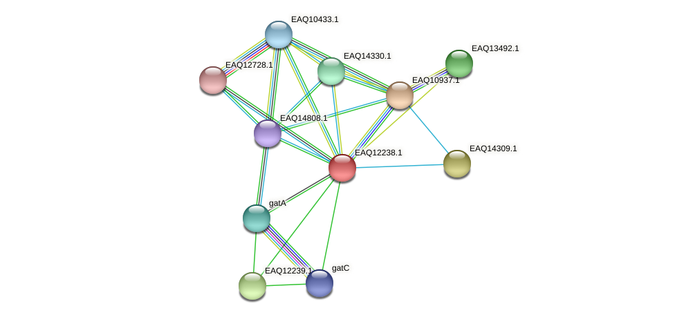 RB2654_08532 protein (Maritimibacter alkaliphilus) - STRING interaction network