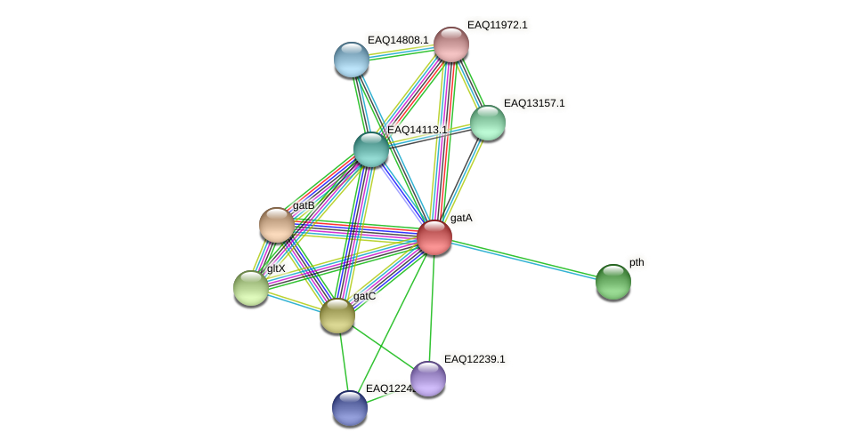gatA protein (Maritimibacter alkaliphilus) - STRING interaction network